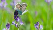 Image illustration - papillon
