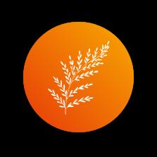 Image icone - vegetal
